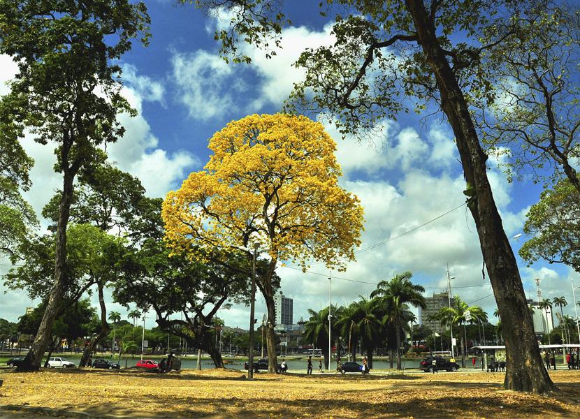 Prêmio reconhece João Pessoa como capital com área urbana mais verde do Norte e Nordeste