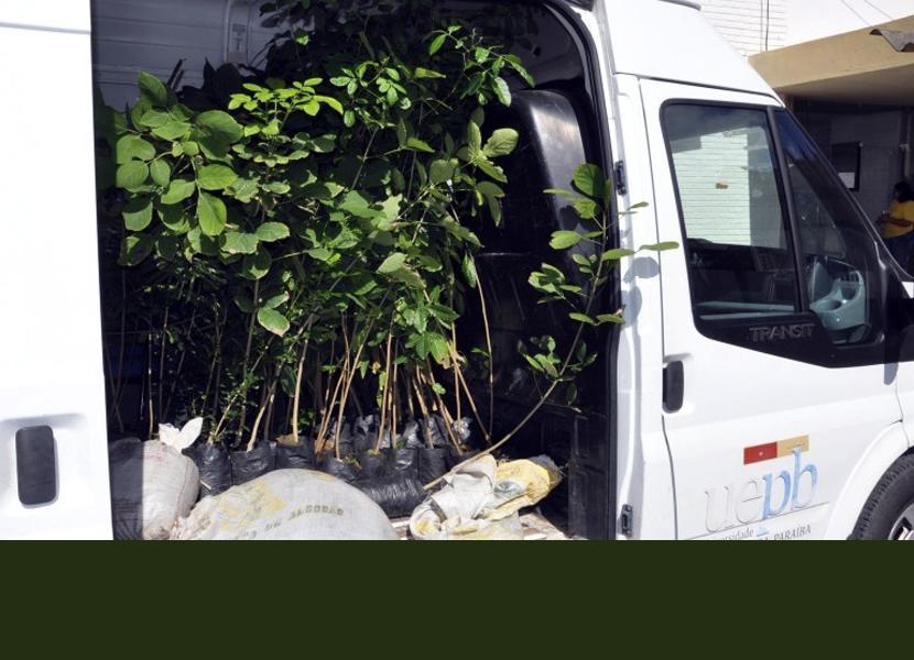 Programa Adote uma Árvore completa 10 anos e já cultivou e distribuiu nesse período mais de 300 mil mudas
